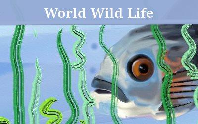 World Wild Life Overfishing