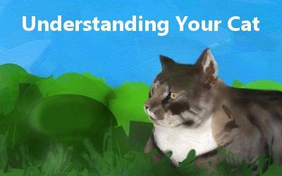 Understanding Your Cat