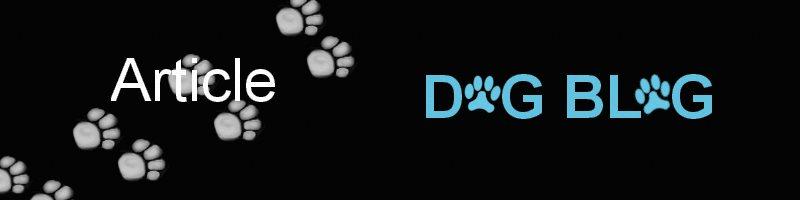 Dog Blog Health Benefits of owning a dog