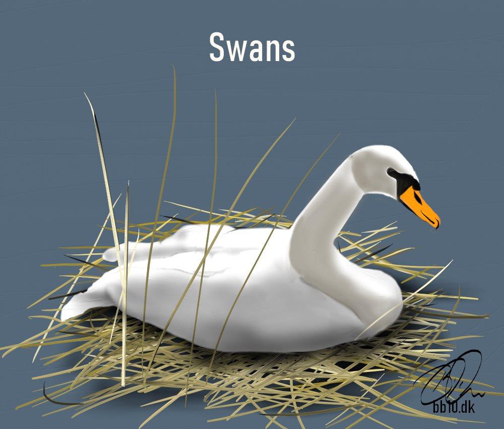 Wild life trust Mute Swan