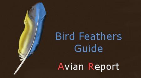 Avian Report Bird Feathers