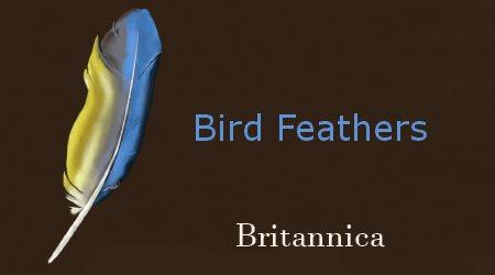 Britannica Bird Feathers