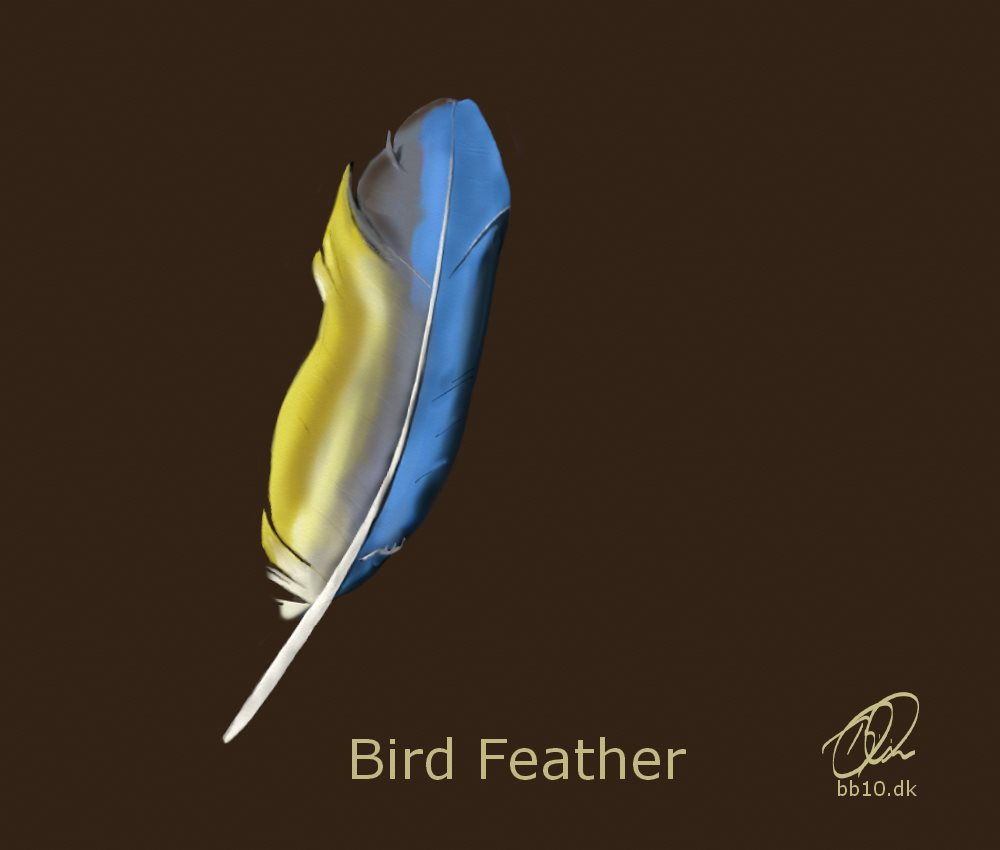 Bird Feather All About Birds Feathers